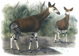 okapi_edit