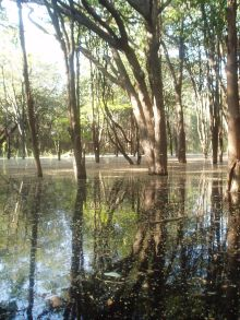 Igapo forest in the Amazon; photo by Adrian Barnett