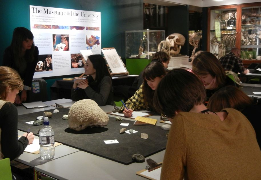 Isomorphology workshop at the Grant Museum